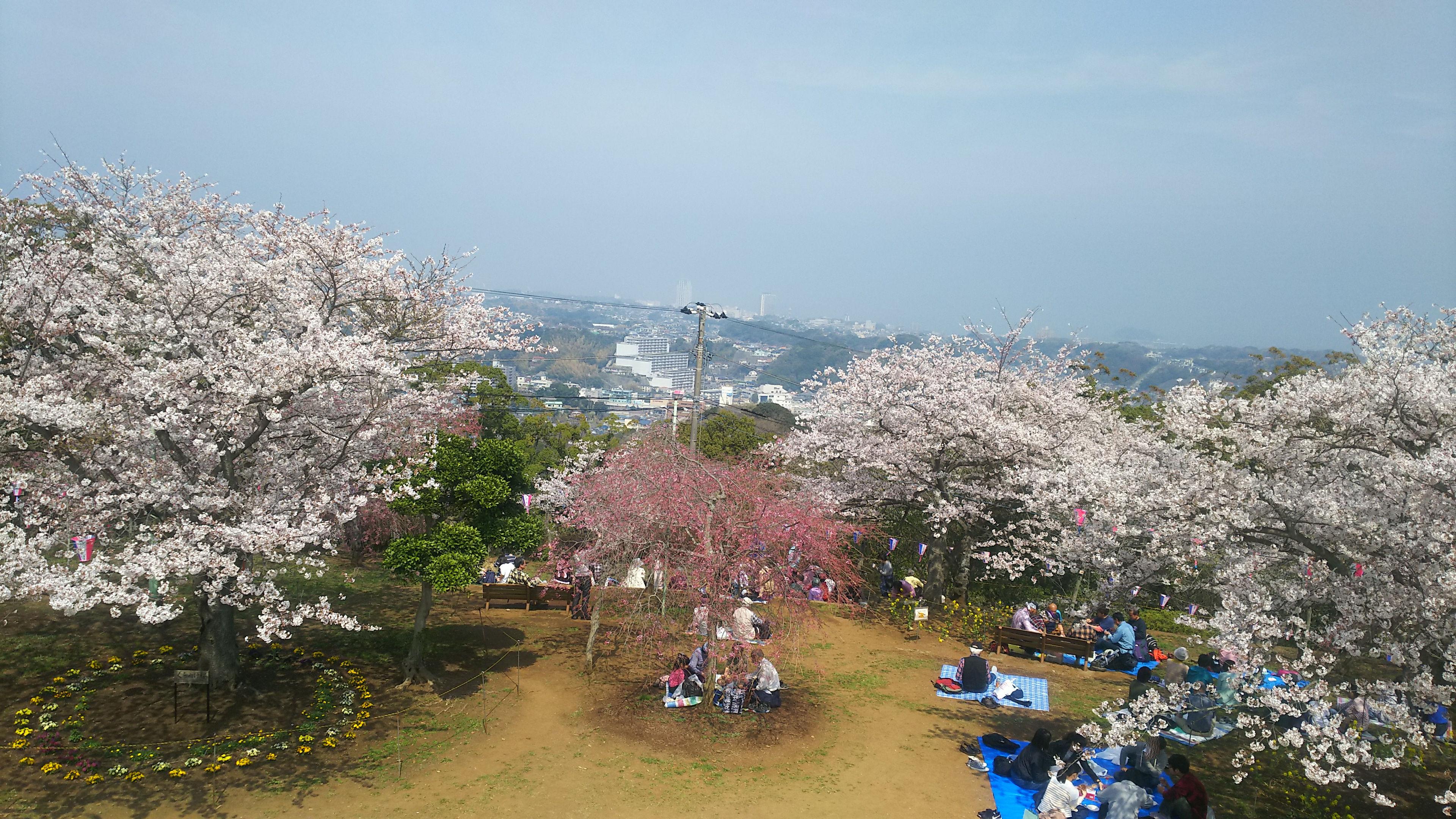 保護中: 衣笠山公園